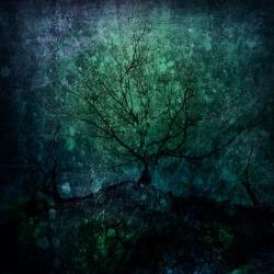 Tilberthwaite Tree web1