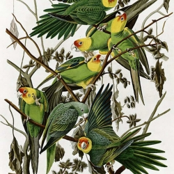 John-James-Audubon.